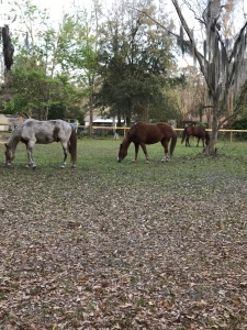 6 Reasons Why I Like Picking Paddocks- The Homestead Kings