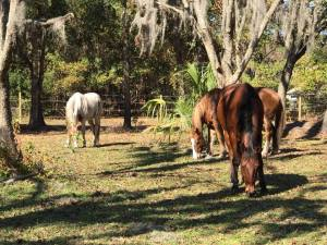General Common Sense Rules & Safety Measures You Should Follow Around Horses - The Homestead Kings